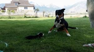 AAAK puppy!