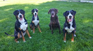 Hazel, Llark, Remus & Cinna