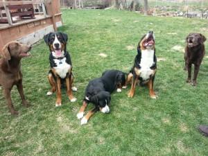 Wallace, Cinna & Echo
