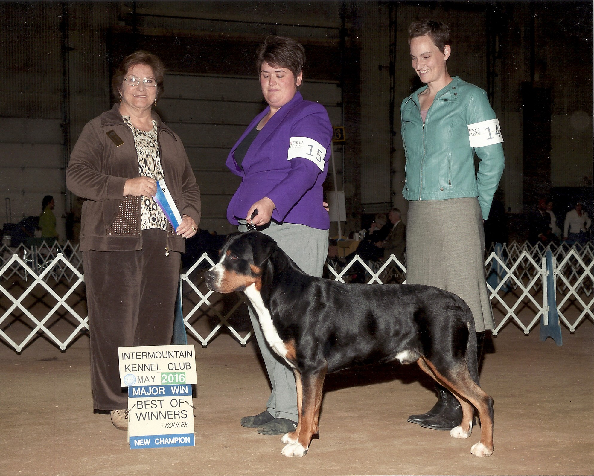 CH Barton Manor's Cruze to Blue Hill (23 months)